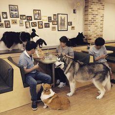 Seoul Offbeat: Bau House Dog Cafe – Elisuper Offbeat Travel