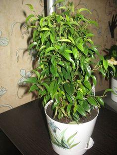 Уход за орхидеями в домашних условиях почему не цветет