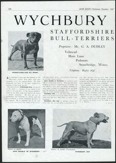STAFFORDSHIRE BULL TERRIER OUR DOGS OLD 1947 DOG BREED KENNEL