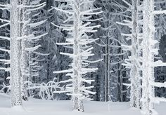 The magic of a forest in winter.