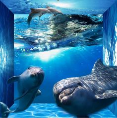 49.98$  Buy now - http://alisj6.worldwells.pw/go.php?t=32661754407 - Custom photo floor wallpaper 3d stereoscopic space dolphin wallpaper 3d floor PVC wallpaper self-adhesive floor wallpaper 49.98$
