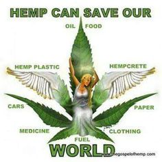 Hemp is one of the most versatile plants on the planet. Food, clothing, paper, construction, skincare and more! This plant is going to save the world. Marijuana Facts, Medical Marijuana, Weed Facts, Cannabis News, Cannabis Oil, Drugs, Herbalism, At Least, 1