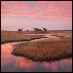 """Taken on the """"nature coast"""" of Florida this is a a tidal stream winding through the salt marsh, with the gulf of Mexico not far behind me."""
