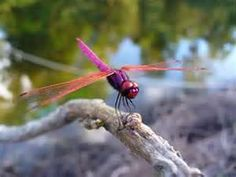 Dragonfly Wallpapers  Free Download Tattoo 28120 Pretty