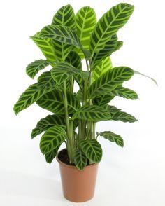 plantas - Buscar con Google