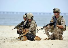 Navy SEAL Team 6 Dog | ... before it spreads further: Navy SEAL dogs don't have titanium teeth