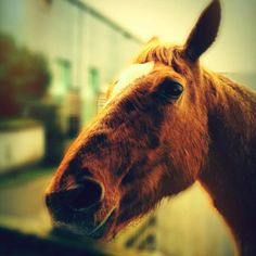 Horse in need of a new home