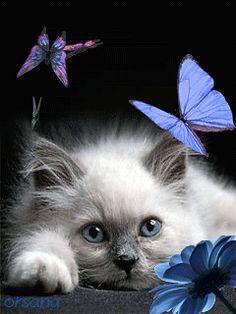 Котенок и бабочки