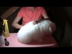 WATCH LATER: Home Grooming for the Coton De Tulear
