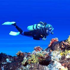Scuba Dive.