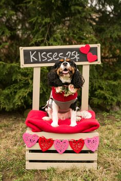 Expert tips on how to plan, host and enjoy your own dog lovers meetup - meet other dog loving friends, and get your pup their own social scene. day photoshoot kids booth ideas How to Host a Dog Lovers Meetup - Pretty Fluffy Puppy Pictures, Dog Photos, Puppy Pics, Pet Shop, Dog First Birthday, Valentines Day Dog, Valentine Picture, Dog Daycare, Pet Costumes