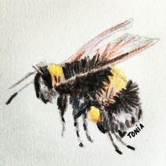 Bee #colourpencils made by myself #flingmar