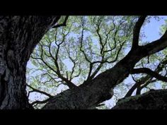 Tree of Life (with Fly Pan Am)  A video montage by My son, Kern Wheeling.