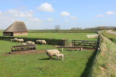 schapenboet en tuinwallen