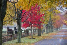 Fall at Runnymede Farm, North Hampton by Debra Woodward