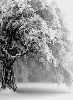 winter's whisper may peace be with everyone this winter :3