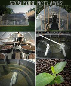 aquaponics-aquaculture system