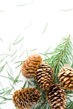 White Desk w/ Piled Pine #Cones and Greenery | Styled #Stock Photography | #Holid,  View more on the LINK: http://www.zeppy.io/product/gb/3/257598594/