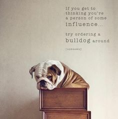 Sally teaches me this everyday. I matter very little in my household. The bulldog rules the roost.