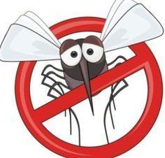 Κουνούπια τέλος! Το ακαταμάχητο μυστικό για να μην σας ξανά τσιμπήσουν