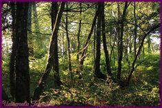 https://flic.kr/p/MtKYg4 | Broceliande - J3 Fontaine de Barenton matin environs 5