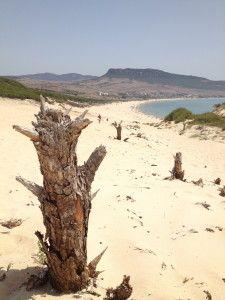 """La cosa più bella di Tarifa sono le dune, enormi, incontaminate, fai una fatica a scalarne i 30 m di altezza col caldo estivo, ma una volta lassù è uno spettacolo ammirare la costa. E ti viene da dire: """"wow!"""""""