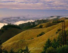 Bolinas Ridge, Mount Tamalpais State Park, Golden Gate National Recreation Area, Marin County, California