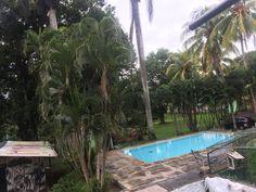 Volunteer in Costa Rica: Sloth/Mammal Conservation Amphibians, Reptiles, Mammals, Costa Rica Sloth, Turtle Conservation, Volunteer Abroad, Sea Turtles, Pet Care, Wildlife