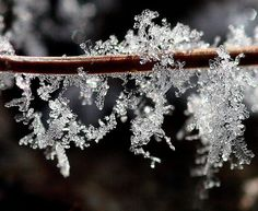 Frost on a pine needle | Flickr - Photo Sharing!