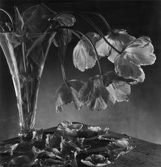 Christian COIGNY :: Still Life, Artwork Portfolio