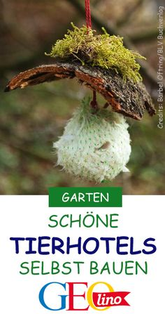 Insekten- und Tierhotels bauen Give numerous animals a shelter in your garden! On GEOlino.de learn h