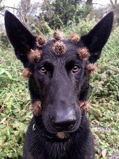 Ähm - ja... ;-) www.tierischer-urlaub.com #urlaubmithund #urlaubmitkatze #hunde #draußen #gutenmorgen  Urlaub mit Hund, Katze & Co - www.tierischer-Urlaub.com – Google+