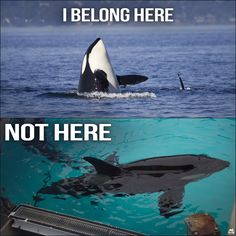 Really? Endorsing SeaWorld? You should know better...