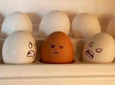 why can't we all just get along. . . .  even eggs are pretty much alike on the inside !