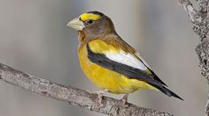 30 Years of Project FeederWatch Yield New Insights About Backyard Birds