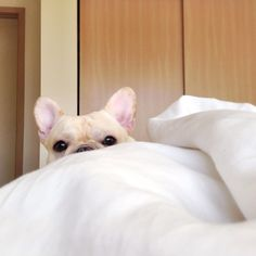 Hiding from the puparazzi.
