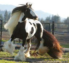 Усатые лошади