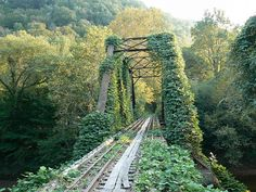 Clay County, WV - Old Railroad Bridge with Kudzu