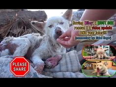New Video Shows How Miley The Husky Is Recovering A Year After Being Rescued From A Rubbish Dump