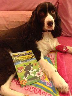Book 1 bedtime story with Maggie. Hugs & Licks! www.MaggieMooseTracks.com