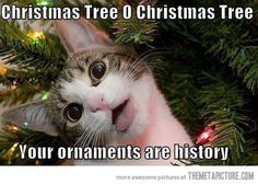 Cute Little Cat Likes Christmas Too