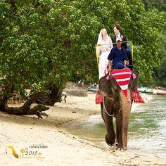 فیلسواری تجربه ی بینظیری که ماهعسل شما را رویایی تر میکند.  #سرگرمی #ماه_عسل #فیل #تایلند #سفر #سفر_به_تایلند #گردشگری #ساحل #دریا #تفریح #تابستان #آرامش #عشق #دوستی #عروسی #نامزدی #همسر  #Travel #Tourism #TAT #triptothailand #resort #summer #adventure #elephant #tourismthailand #beach #bestvco #honeymoon #bride