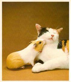 Guinea pigs love all animals :-)