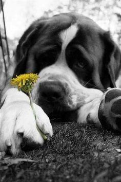 photo a noir et blanc une touche de couleurs