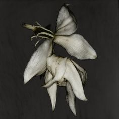 """Carsten Witte. """"The Secret Life of Plants"""""""