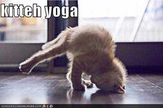 kitteh-yoga.jpg (500×333)