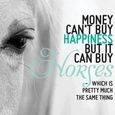 Money can buy happiness cuz it can buy horses without my horse life would not be life My Horse, Horse Love, Horse Girl, Horse Tack, Horse Stalls, Horse Barns, Dressage Horses, Hobby Horse, All The Pretty Horses