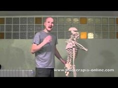 Rectificación lumbar - Visión desde la fisioterapia y la medicina natural.