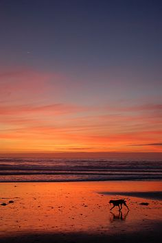 Carmel Sunset - Carmel, California Every night everyone would go to the beach to watch the sunset
