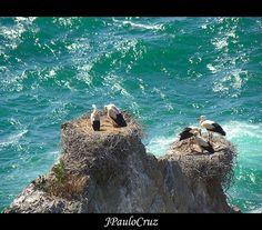 Cabo Sardão, Portugal | Cegonhas / Cabo Sardão , a photo by JPauloCruz on Flickr.